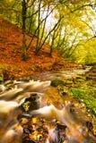 Новое река Стоковые Изображения