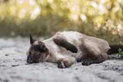 2018 новое фото, малый милый рассеянный кот в улице стоковые изображения rf