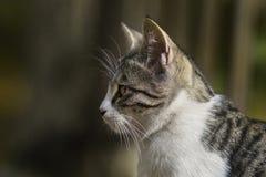 2018 новое фото, милая рассеянная голова кота стоковые изображения rf