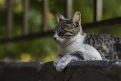 2018 новое фото, милые рассеянные сны кота стоковые фотографии rf