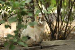 2018 новое фото, милый коричневый белый длинный кот помех волос стоковое фото