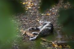 новое фото 2018, милый рассеянный кот очищает тело стоковое изображение rf