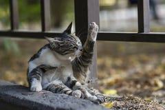 новое фото 2018, милый рассеянный кот очищает тело стоковые фотографии rf