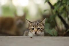 2018 новое фото, прелестный малый кот помех младенца стоковое изображение