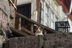 новое фото 2018, смешной рассеянный кот сонно с утомленной стороной стоковая фотография rf