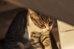 2018 новое фото, сторона милого рассеянного кота унылая стоковое изображение