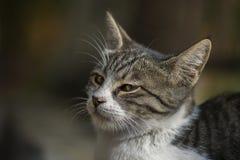 2018 новое фото, сторона милого рассеянного кота унылая стоковое изображение rf