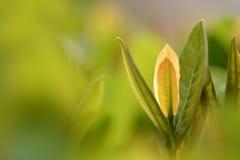 Новорожденный дерева цветка и верхней части Стоковое Изображение RF