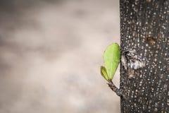 Новые всходы детенышей на дереве Стоковые Изображения RF