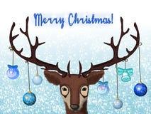 Новые Годы оленей поздравляют вас с с Рождеством Христовым! Стоковые Изображения RF