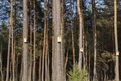 новые деревянные birdhouses стоковое изображение