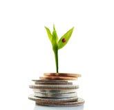 Новые деньги роста Стоковая Фотография RF
