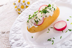 Новые картошки с творогом весны стоковая фотография rf