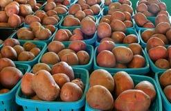 новые картошки стоковые изображения