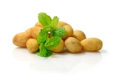 Новые картошки Стоковые Фотографии RF
