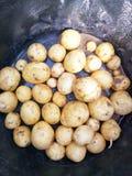 Новые картошки Стоковые Изображения RF