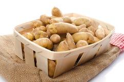 Новые картошки rattes в корзине Стоковое Фото