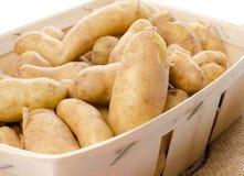 Новые картошки rattes в корзине Стоковые Изображения RF