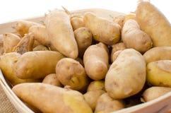 Новые картошки rattes в корзине Стоковая Фотография RF