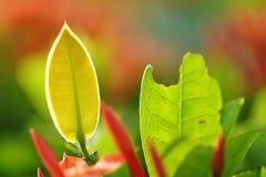 Новые молодые лист на природе Стоковые Фото