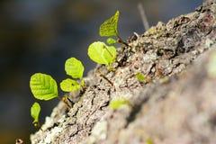 Новые росток и лист Стоковые Изображения RF