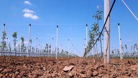 Новые современные яблоки растя место Стоковые Фото