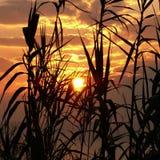 Новый восход солнца между заводами Стоковое Изображение RF