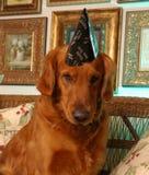 Новый Год барстера счастливое Стоковые Фото