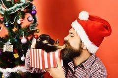 Новый Год концепции собаки Doggy нажимает Санту прочь стоковое фото rf