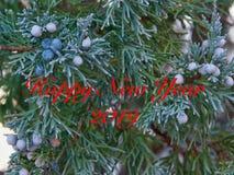 Новый Год 2019 можжевельника стоковое изображение