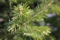 Новый Год предпосылки вал ветви зеленый Стоковые Изображения RF