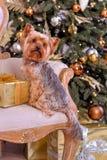 Новый Год собаки Стоковые Изображения RF
