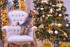 Новый Год собаки Стоковые Фото