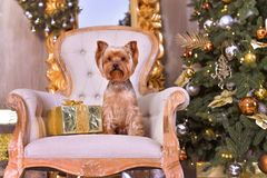 Новый Год собаки Стоковая Фотография RF