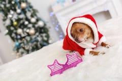 Новый Год Украшенная комната с собакой в костюме santa лежа около причудливых стекел смотря в сторону конец-вверх стоковое фото rf