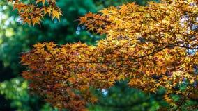 Новый день листья новые светлая новая Стоковые Изображения