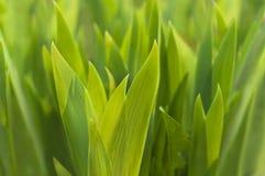 Новый зеленый цвет выходит весной Стоковое Фото