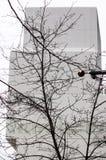 Новый музей современного искусства, безлистное дерево Стоковые Изображения