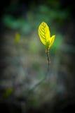 Новый расти лист земли Стоковое Изображение RF