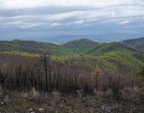 Новый рост на горе Стоковое Изображение RF