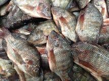Новый рынок еды ингридиентов Стоковое фото RF