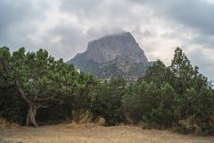 Новый светлый можжевельник и горные виды Стоковые Фотографии RF