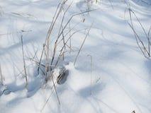 Новый снег покрыл в прошлом году траву s в зиме Стоковые Фото