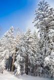 новый снежок Стоковые Фотографии RF