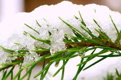 новый снежок Стоковые Фото
