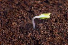 Новый старт жизни начала новые Прорастание завода на почве Стоковое фото RF