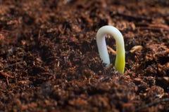 Новый старт жизни начала новые Прорастание завода на почве Стоковые Изображения RF