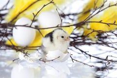 Новый цыпленок люка стоя рядом с яичком shells.GN Стоковые Изображения RF