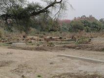 Новый pics сада Стоковая Фотография RF