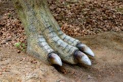 Нога аллозавра задняя стоковые фотографии rf